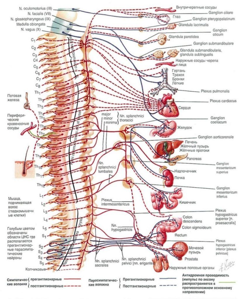 Акупунктура и рефлексотерапия в неврологии
