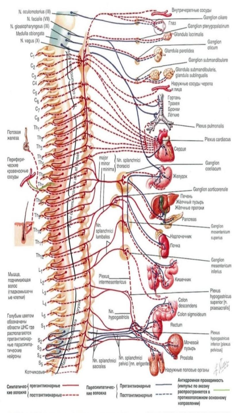 Акупунктура і рефлексотерапія у неврології
