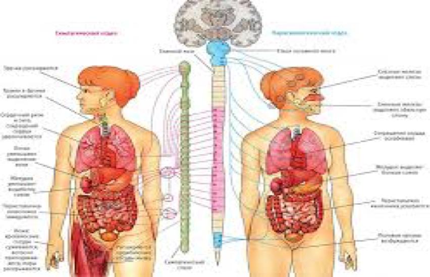 Вегетососудистая дистония (ВСД) лечение методами рефлексотерапии